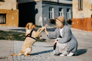 טיפים לגידול כלבים צעירים ומבוגרים